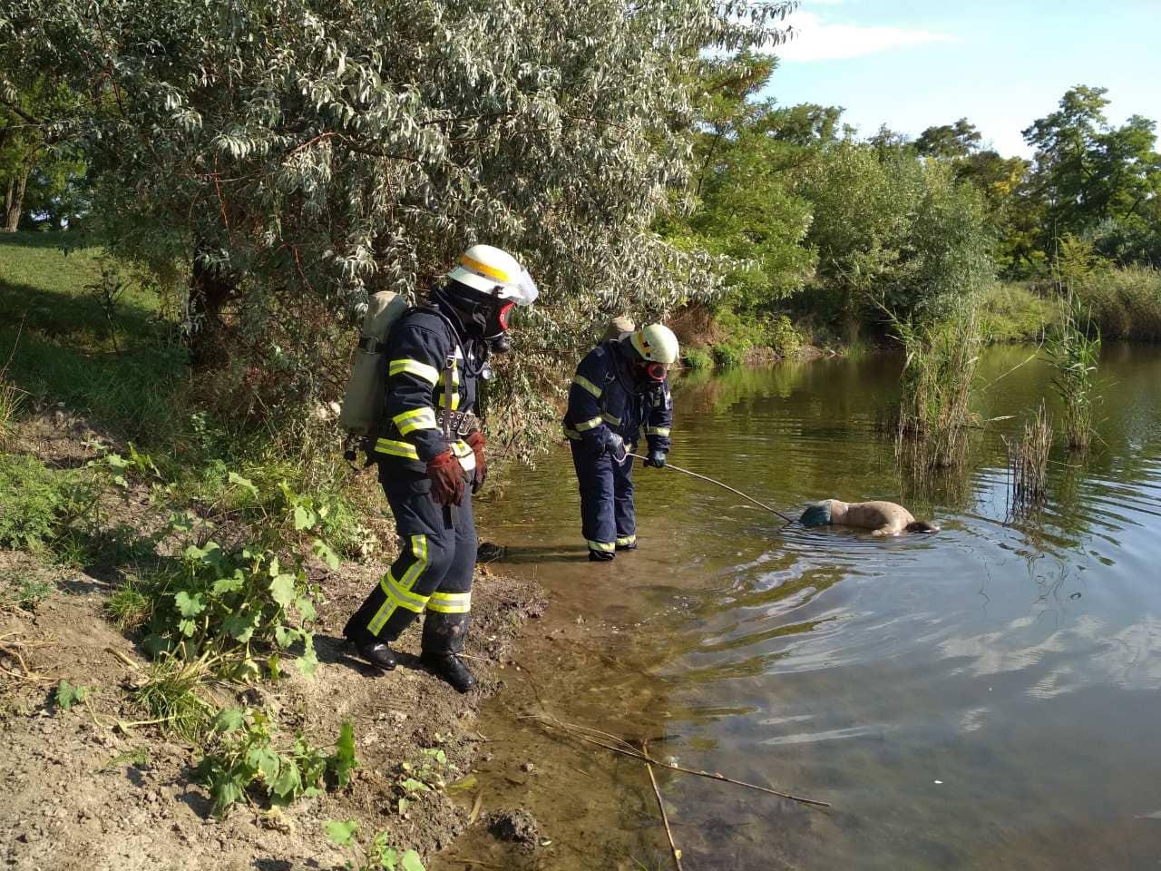 В воде плавал труп мужчины: спасатели с трудом смогли достать тело. Новости Днепра