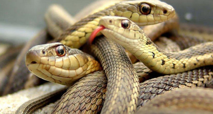 В Днепре на Набережной возле кафе вновь появились змеи. Новости Днепра