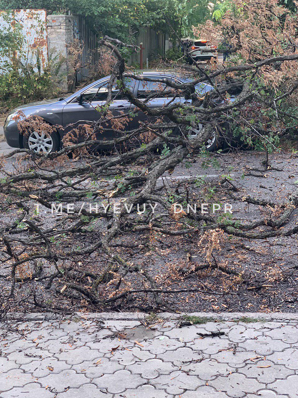 «Деревопад» в Днепре: автомобили горожан подверглись «нападению». Новости Днепра