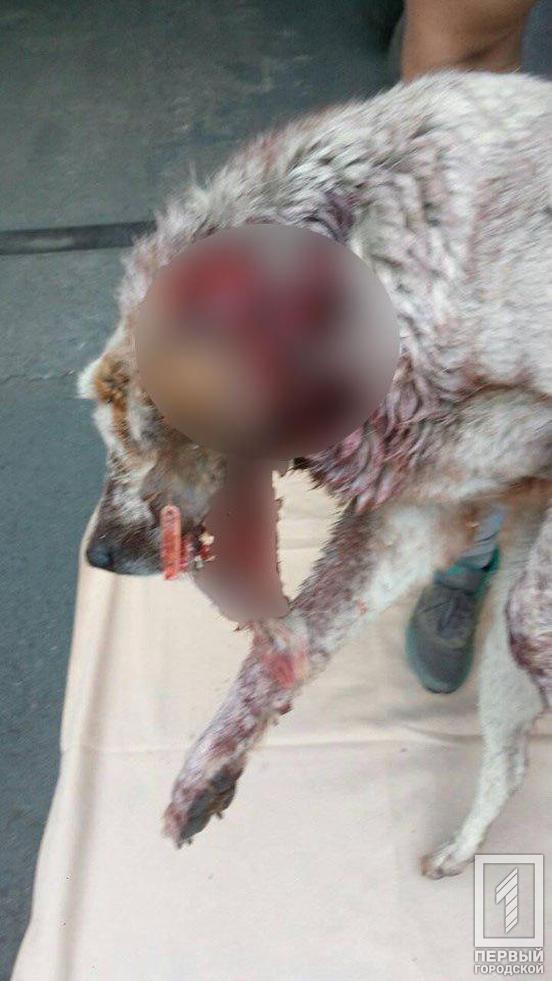 Живодеры содрали кожу с собаки и попросту бросили ее умирать от боли. Новости Днепра