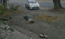 Кровь и следы побоев: в Днепре на улице найдено тело мужчины