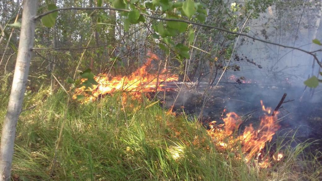 Лесной пожар: спасатели несколько часов тушили возгорание. Новости Днепра