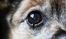 Живодеры содрали кожу с собаки и попросту бросили ее умирать от боли