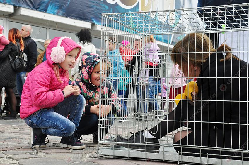 В Днепре перед цирком сидела девушка в клетке. Новости Днепра