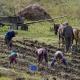 Рынку земли быть: кто сможет купить украинскую землю