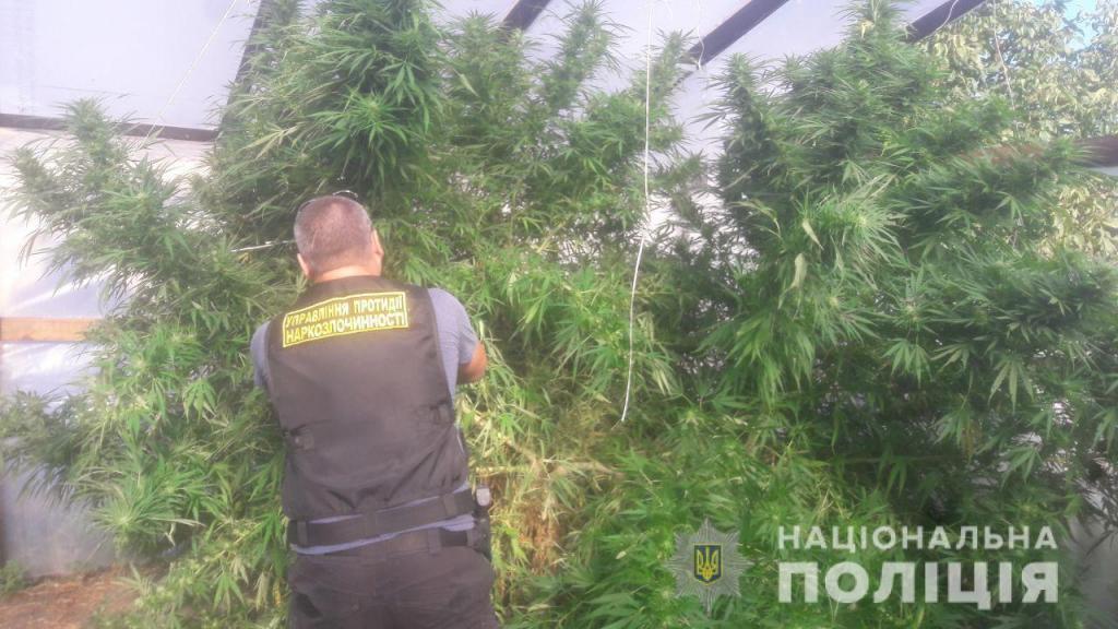 Марихуаны на миллион: патрульные выявили крупную плантацию растений в частном секторе. Новости Днепра