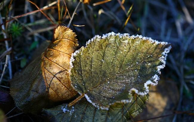 Дожди и заморозки: какая погода ожидает днепрян. Новости Днепра