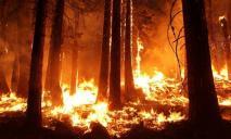 Спасатели бьют тревогу: дважды за день тушили пожар в одном и том же лесу
