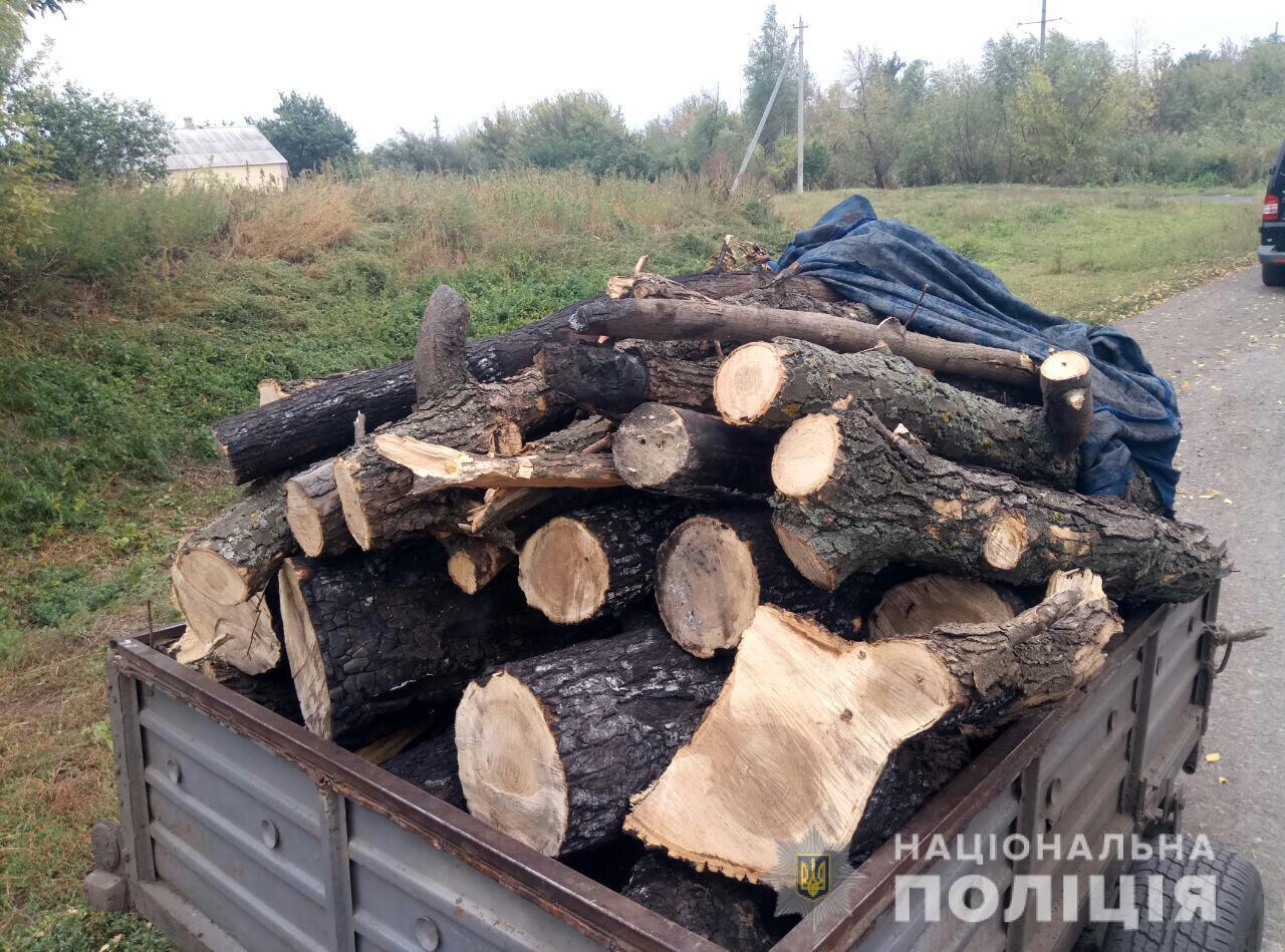 Рубил деревья: мужчину застали на горячем. Новости Днепра