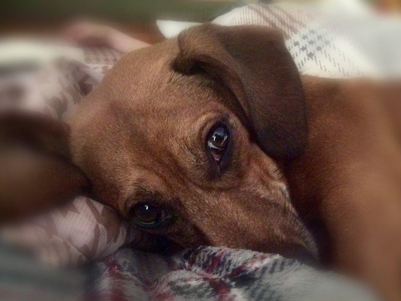 Живое существо не ценнее сумки: хозяин закрыл своего пса в камере хранения «АТБ». Новости Днепра