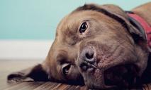 Выбросили из окна: неизвестные жестоко расправились с собакой