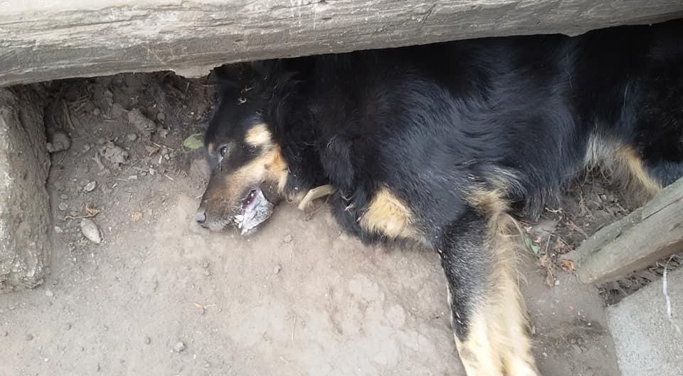 «Собаки мешают грабить»: в Днепре воры массово травят животных. Новости Днепра