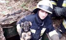 В Днепре спасли щенка, который провалился в заброшенный колодец