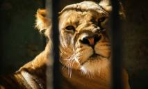 Митинг в Днепре против насилия животных в цирке: где и когда