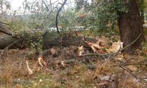 В Днепре упавшее дерево перегородило въезд и выезд во двор многоэтажек
