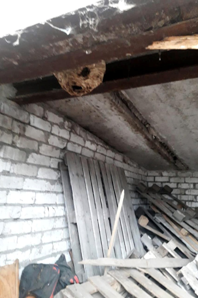 Спасатели против насекомых: у днепрян в гараже нашли гнездо шершней. Новости Днепра