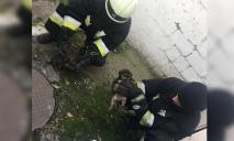 Провалились в туалет: в Днепре спасали щенков