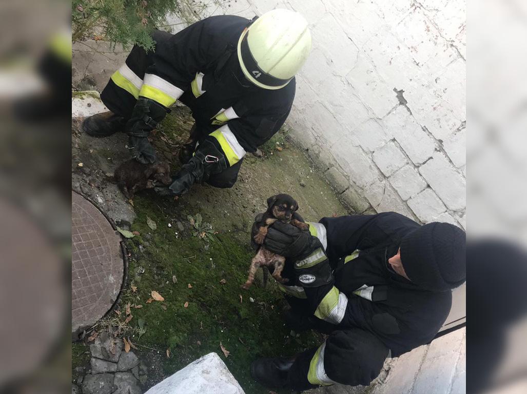 Провалились в туалет: в Днепре спасали щенков. Новости Днепра