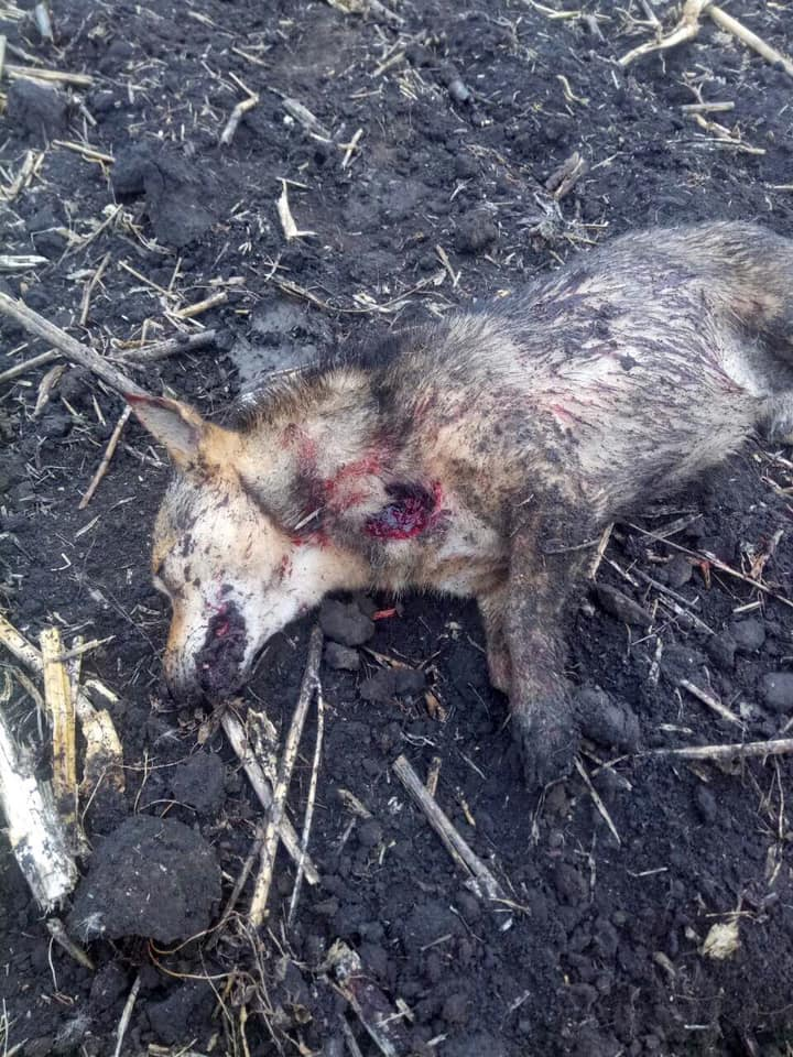 Живодерство: пьяные охотники пристрелили пса на глазах у хозяина. Новости Днепра