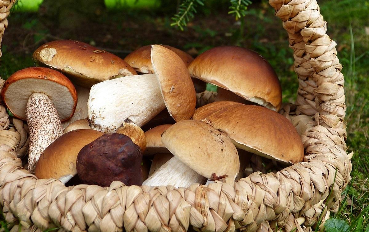 Это важно знать: как не отравиться во время грибного сезона. Новости Днепра