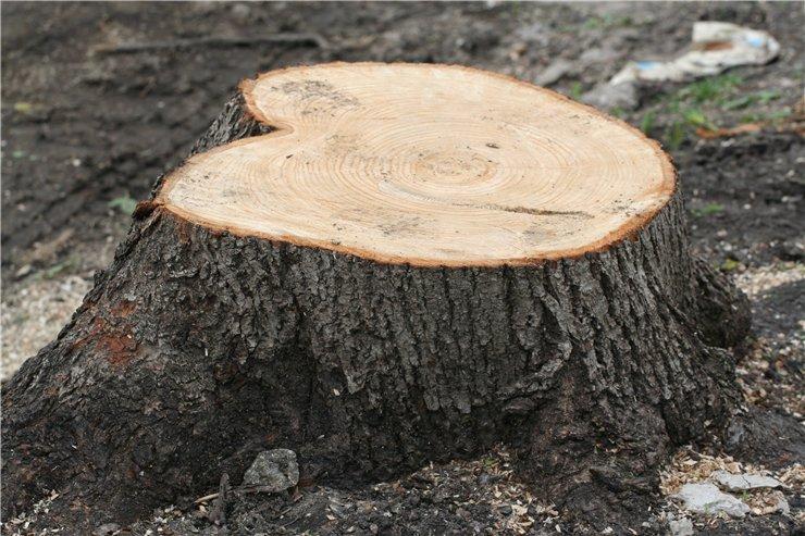 Парк Днепра лишиться почти 60-ти деревьев. Новости Днепра