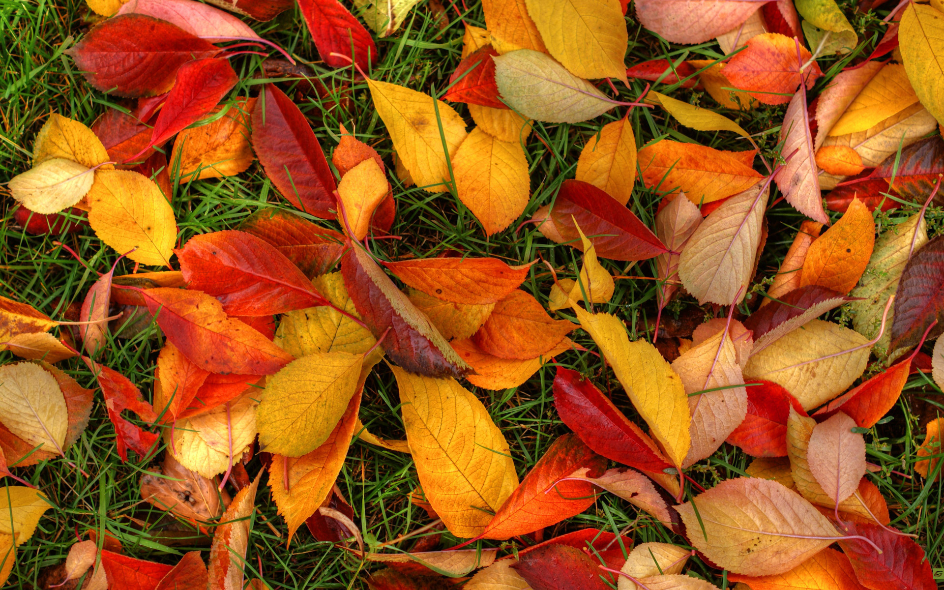 В Днепре запретили убирать опавшие листья: причины. Новости Днепра