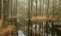 Бродили по болотам: в Днепре пропала супружеская пара