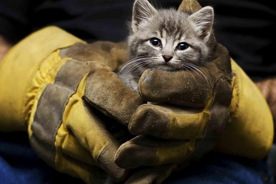 В Днепре из-под земли спасали котенка. Новости Днепра
