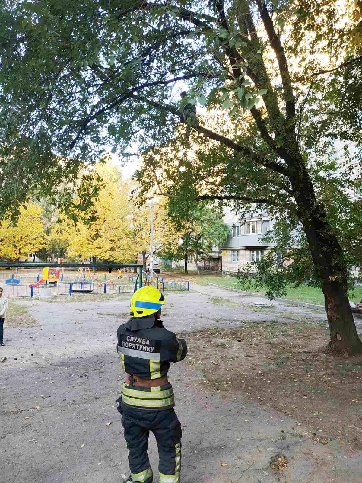 «Мог сорваться»: в Днепре мальчик «застрял» на дереве. Новости Днепра