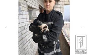 «Залез на подоконник 13-го этажа»: рискового кота снимали спасатели. Афиша Днепра