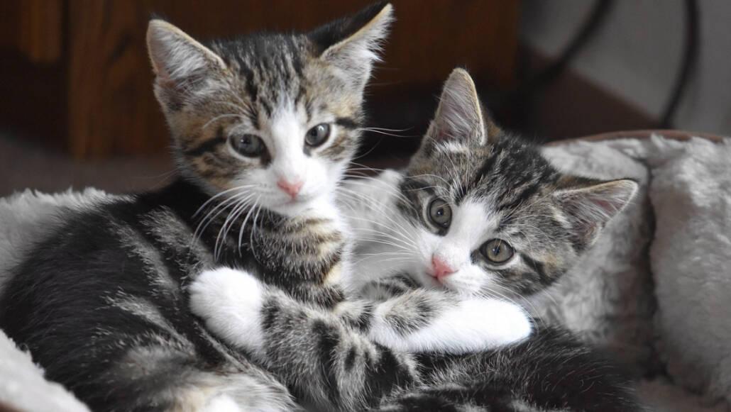 Бросили в глубокий колодец: подростки жестоко расправились с котятами. Новости Украины