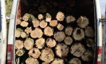 «Вооружились бензопилой и уничтожали лес»: мужчин застали «на горячем»