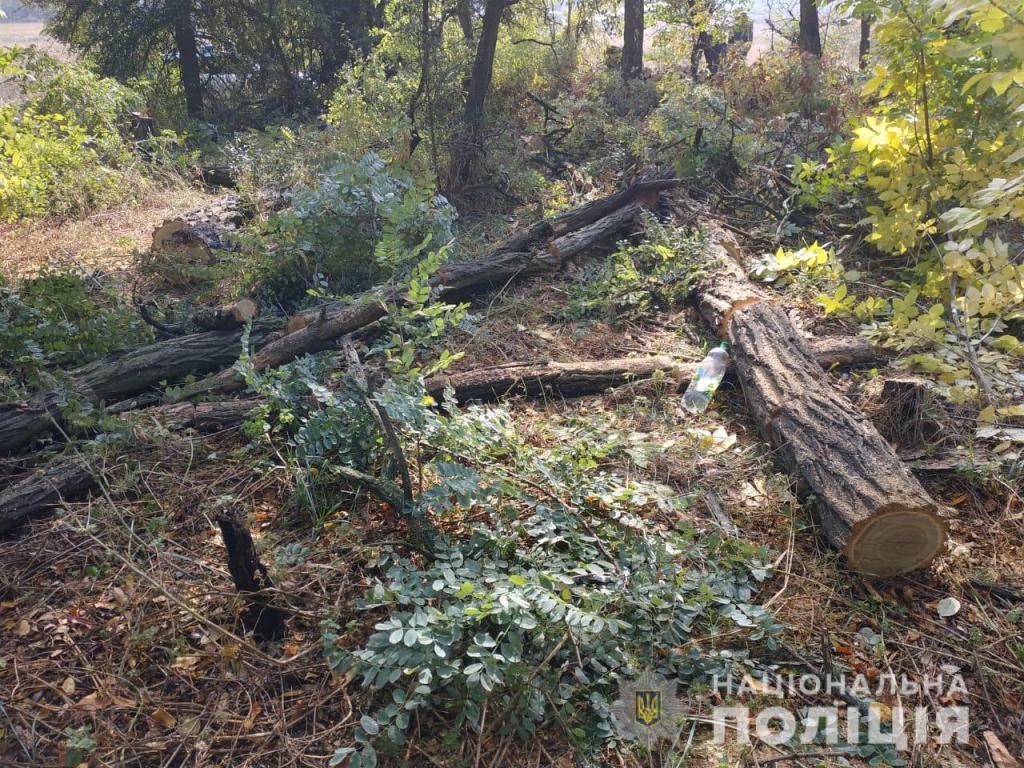 Мужчины рубили лес. Новости Днепра