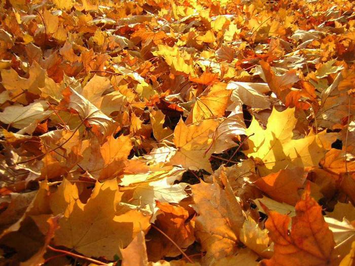 Что делать с опавшими листьями. Новости Днепра