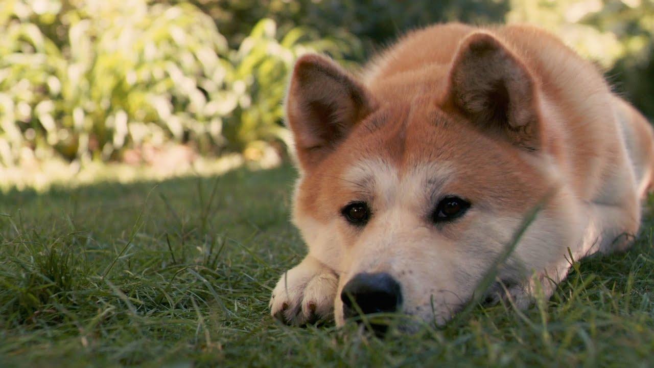 «Хатико по-днепровски»: верный пес вторую неделю ждет своего хозяина на остановке. Новости Днепра