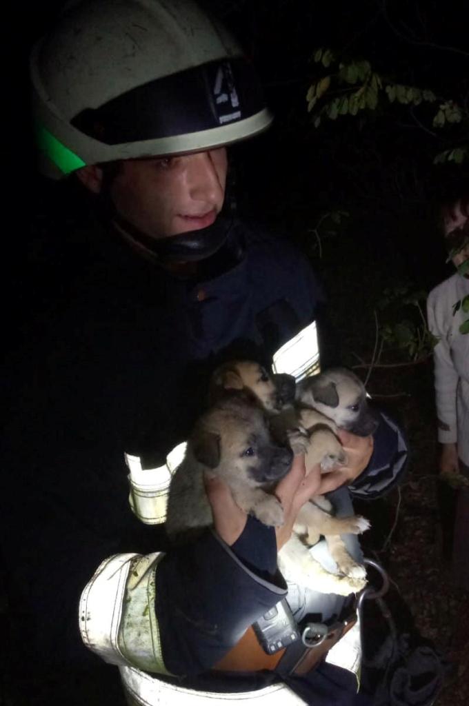 Спасатели вытащили из ловушки щенков. Новости Днепра