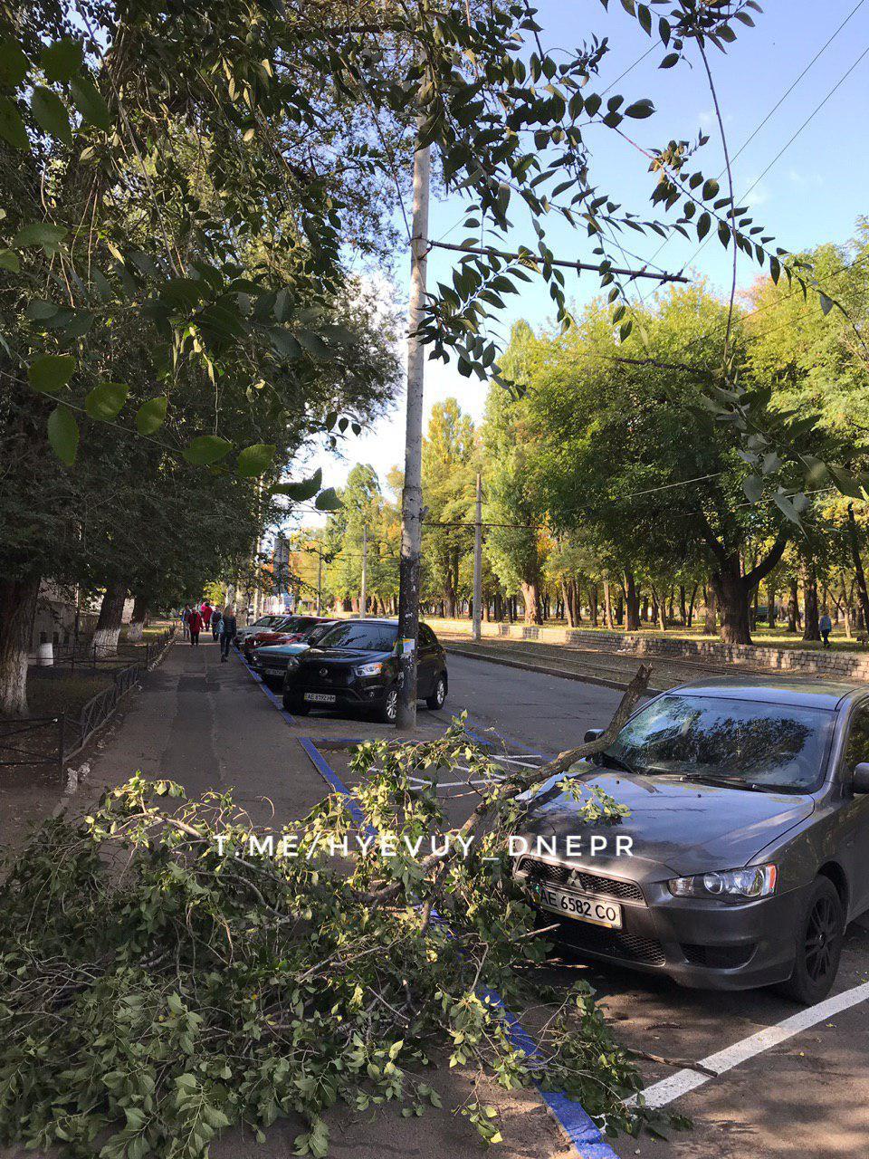 «Парковка не спасла»: ветка пробила лобовое стекло автомобиля. Новости Днепра