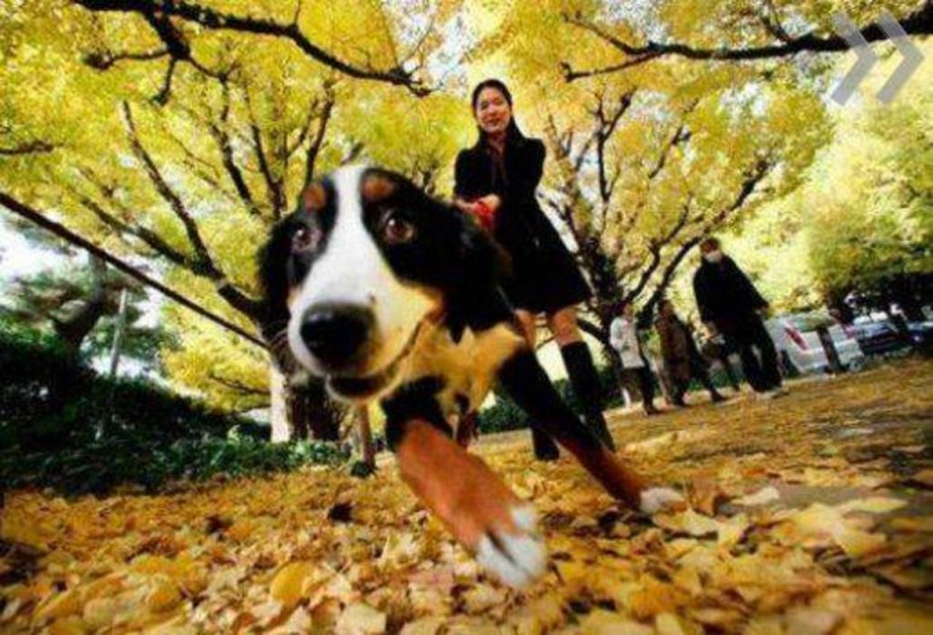 Женщина не убирает за собакой. Новости Днепра
