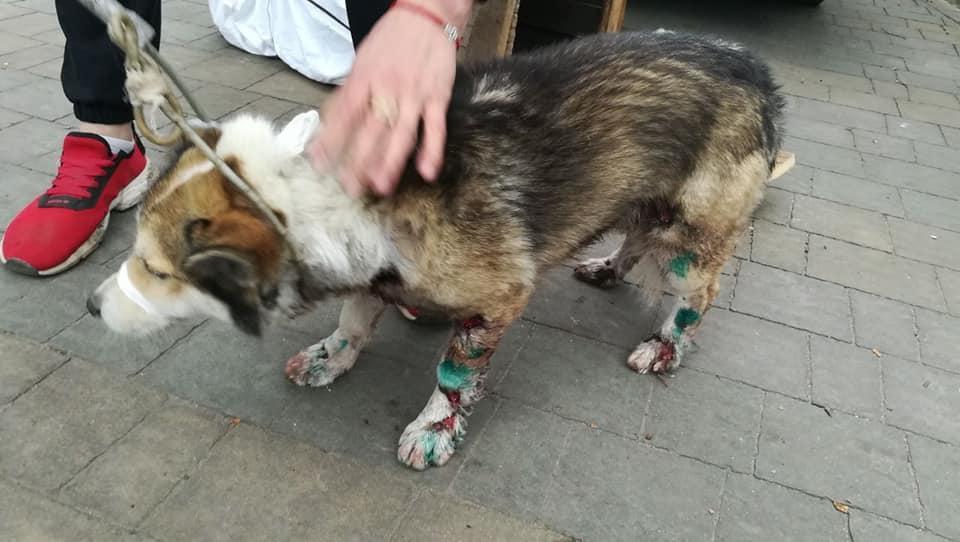 Лапы разодраны до крови: чиновник привязал пса к машине и тащил на полной скорости. Новости Днепра