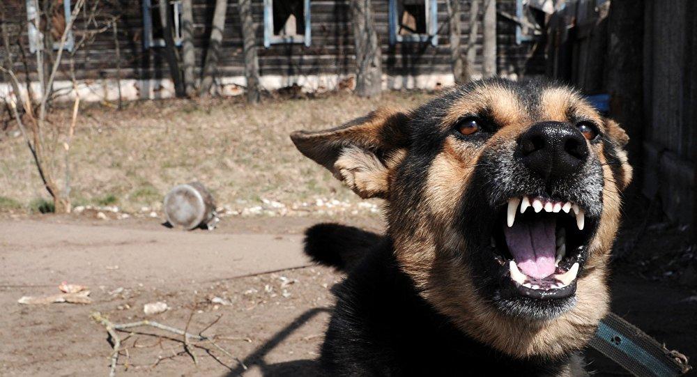 Нападение бездомных собак: пострадал подросток. Новости Днепра