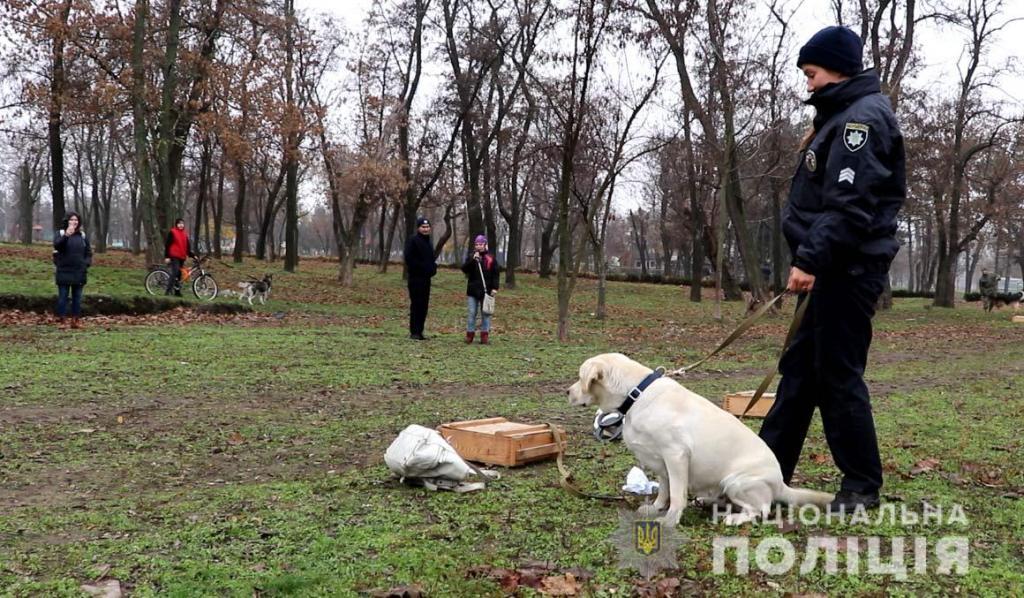 В Днепре открылась площадка для дрессировки и выгула собак. Новости Днепра