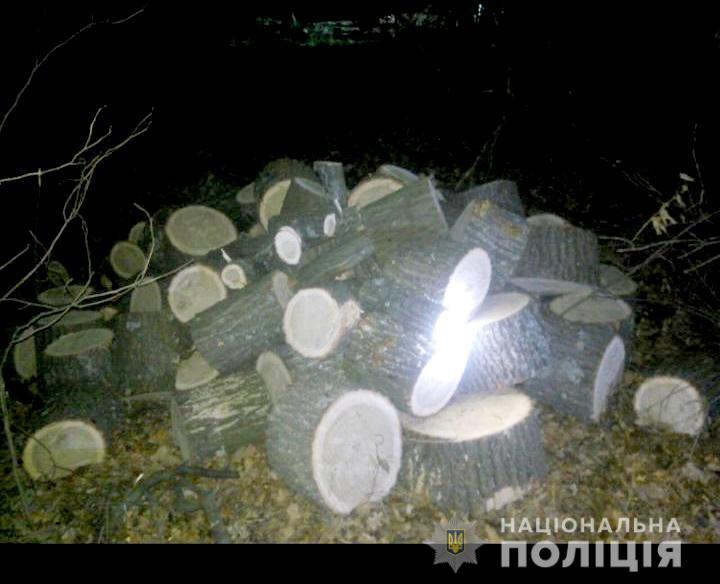 «Услышал звук бензопилы»: «черных» лесорубов поймали «на горячем». Новости Днепра