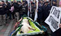 Венки и гроб: под Верховной Радой «похоронили» свинью