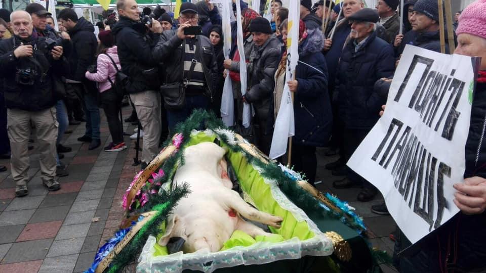 Венки и гроб: под Верховной Радой «похоронили» свинью. Новости Украины