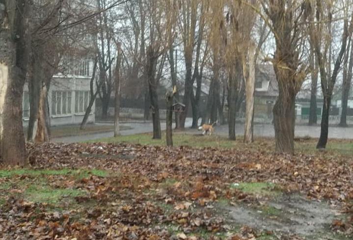Без поводка и намордника: в Днепре возле школы гуляли агрессивные собаки. Новости Днепра