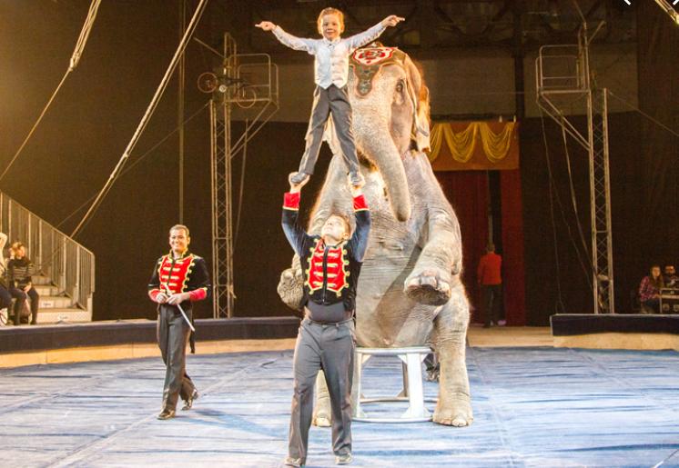 Изрезали плакат запрещенного в Европе цирка. Новости Днепра
