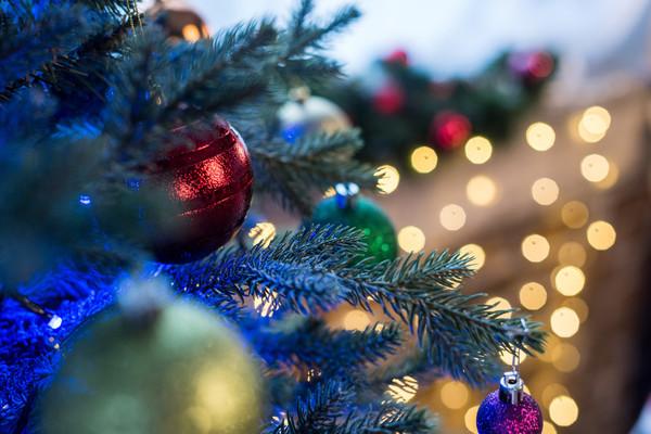 Где в Днепре собираются официально продавать елки. Новости Днепра
