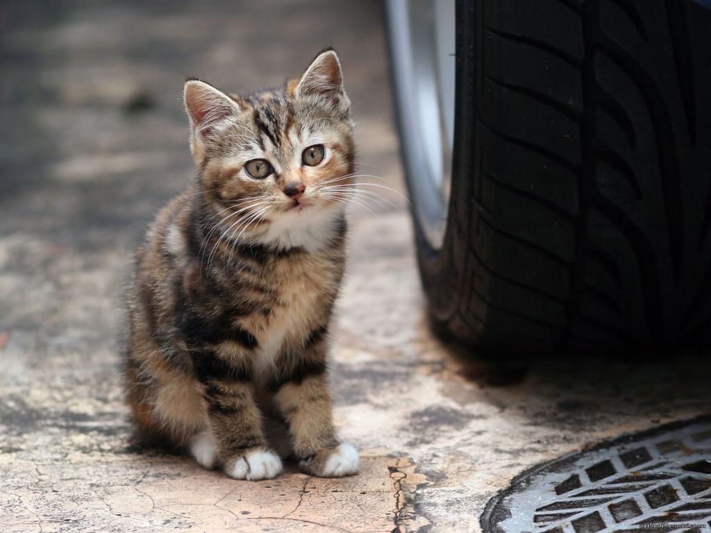 В Днепре школьники натравливают на кошек стаю собак: реакция полиции. Новости Днепра