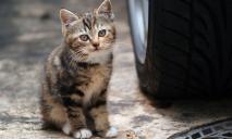 В Днепре школьники натравливают на кошек стаю собак: реакция полиции