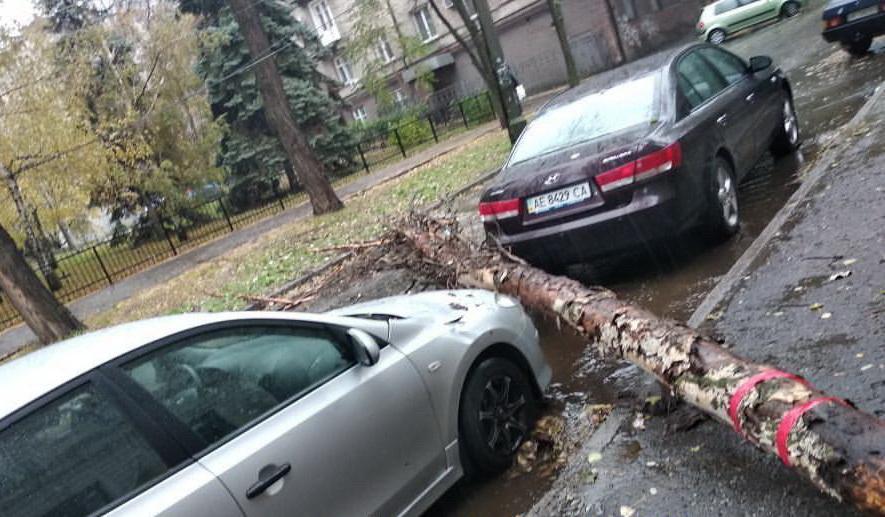 «Так выглядит удача»: в Днепре упало дерево. Новости Днепра